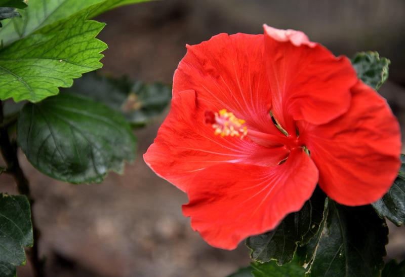 青岛世园会植物馆植物