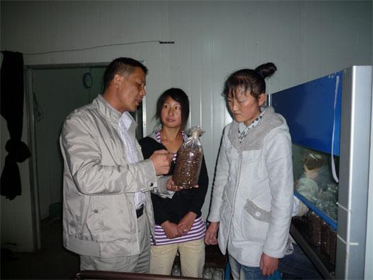 团支部书记赵碧康指导种植户制作菌种