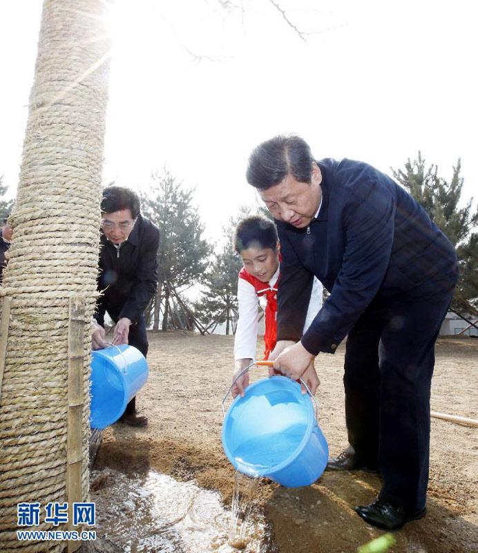 起给刚栽下的银杏树浇水