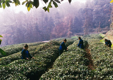 特别策划:中国宗教一甲子和谐共生 六十年利乐